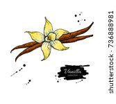 vanilla flower and bean stick... | Shutterstock .eps vector #736888981