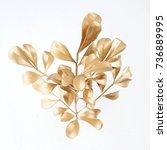 set of golden leaf design... | Shutterstock . vector #736889995