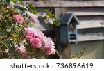 Small photo of pink roses ramble over a wooden shed in warm sunlight. An English garden allotment with fragrant, pretty roses climbing across rustic wooden boards attracting insects and wildlife