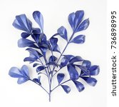 blue leaf design elements.... | Shutterstock . vector #736898995