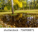puddle of water reflection in... | Shutterstock . vector #736908871