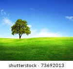 Field Tree And Blue Sky