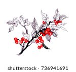 hand drawn painting branches... | Shutterstock . vector #736941691