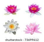 Collection Of Water Lily...