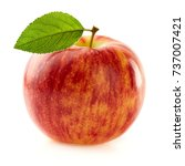 beauty apple with leaf | Shutterstock . vector #737007421