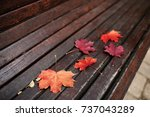 Autumn Leaves Lie On A Bench I...
