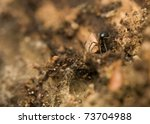 Small photo of Linyphiidae
