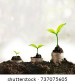 grow in sunlight can be symbol... | Shutterstock . vector #737075605