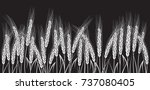 white wheat field isolated on... | Shutterstock . vector #737080405