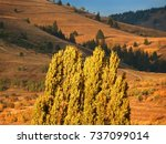 mountains and forests ... | Shutterstock . vector #737099014