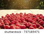 many tasty raspberries on... | Shutterstock . vector #737185471
