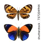Stock photo set butterfly isolated on a white background 737204944