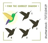 find the correct shadow....   Shutterstock .eps vector #737210419