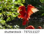 a stork in the wild. | Shutterstock . vector #737211127