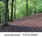 clearing in a hillside beech... | Shutterstock . vector #737215969