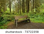 Bench In Hoh Rain Forest In...