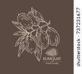 background with kumquat  branch ...   Shutterstock .eps vector #737231677