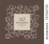 background with macadamia ... | Shutterstock .eps vector #737231725