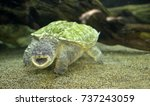 close up of alligator snapping... | Shutterstock . vector #737243059