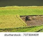 zoom in to farmer when they...   Shutterstock . vector #737304409