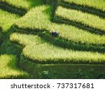 zoom in to terraced rice field.   Shutterstock . vector #737317681