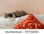 Stock photo  a cat that sleeps in house on the couch of the living room 73732051