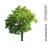 tree isolated on white... | Shutterstock . vector #737332237