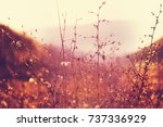 sunny day on the meadow | Shutterstock . vector #737336929