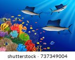 sailfish swimming under water... | Shutterstock .eps vector #737349004