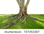 trunk and tree roots  on white... | Shutterstock . vector #737352307
