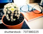cactus  book and the glasses.... | Shutterstock . vector #737380225