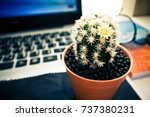 cactus  book and the glasses.... | Shutterstock . vector #737380231