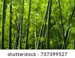 Lanscape Of Bamboo Tree In...