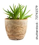 Aloe Vera In A Pot Isolated On...
