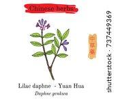 medicinal herbs of china. lilac ...