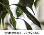 udumbara | Shutterstock . vector #737524537