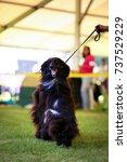 afghan hound | Shutterstock . vector #737529229
