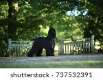afghan hound | Shutterstock . vector #737532391