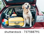 cute golden retriever dog... | Shutterstock . vector #737588791
