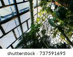 windows  palm leaves | Shutterstock . vector #737591695