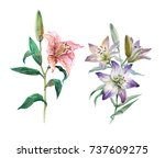set of pink and blue lilies... | Shutterstock . vector #737609275