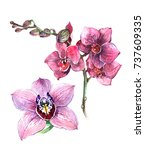 pink  orchid flowers. buds of... | Shutterstock . vector #737609335