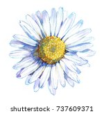 chamomile flower  top view.... | Shutterstock . vector #737609371