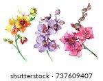 pink  yellow  purple orchid...   Shutterstock . vector #737609407