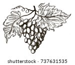 bunch of grapes with leaves... | Shutterstock .eps vector #737631535