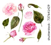 set of watercolor pink roses ... | Shutterstock . vector #737641429