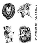 graphical set of lions isolated ... | Shutterstock .eps vector #737655679