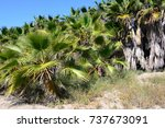 palm trees in spain   Shutterstock . vector #737673091