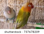 two colorful parrots sitting on ... | Shutterstock . vector #737678209