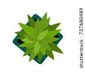 top view. big green plants easy ... | Shutterstock .eps vector #737680489